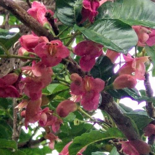 Pink shaded flowers, New Zealand @lindsantevans
