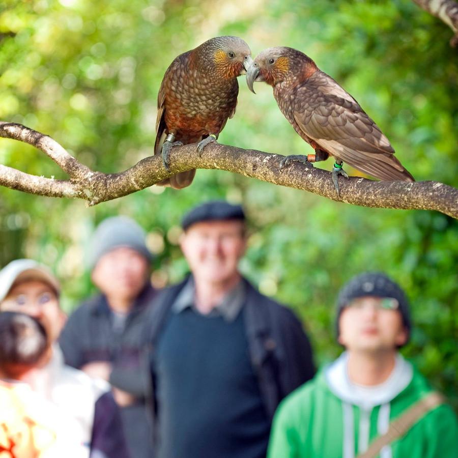 @Pūkaha National Wildlife Centre