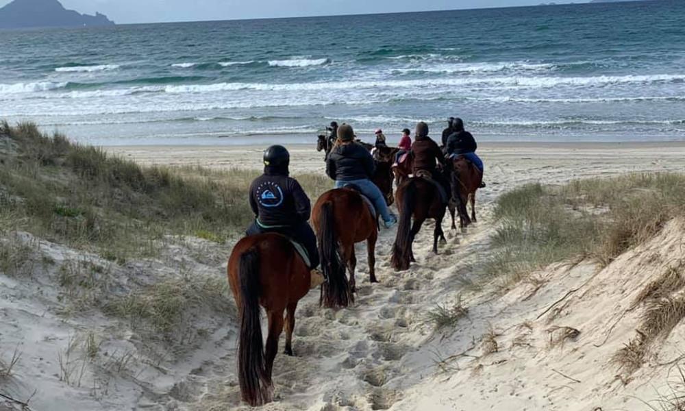 @Waipu Horse Adventures