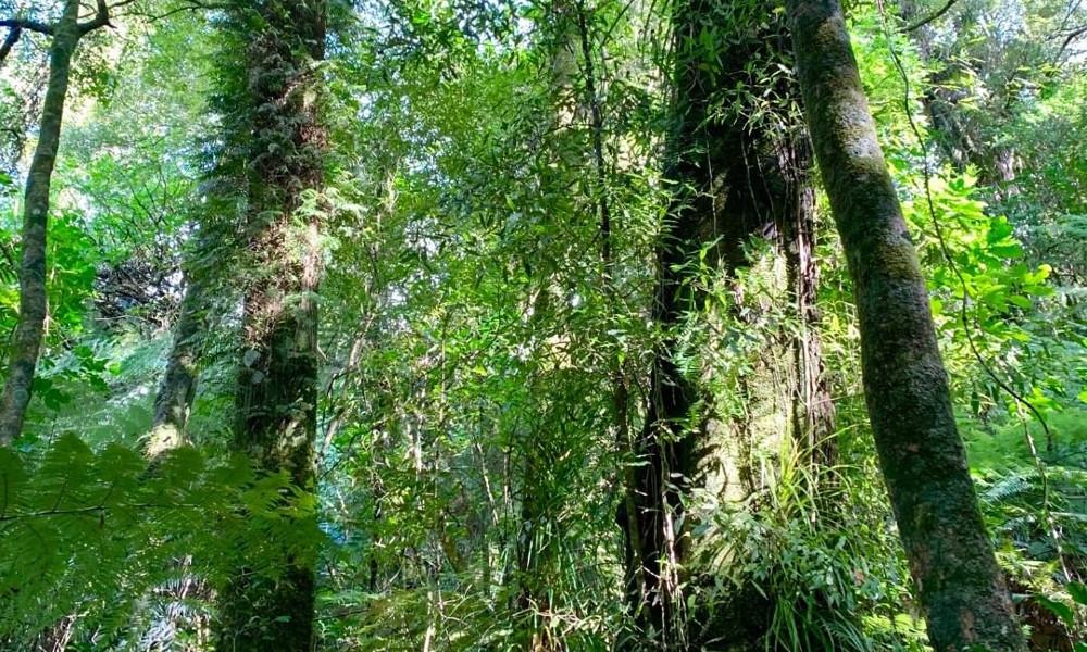 Aongatete Forest, New Zealand @bensurfie