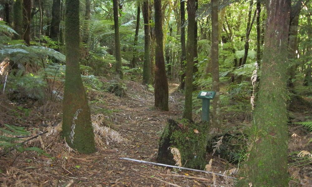 Aongatete Nature Trail, New Zealand @kinsahaysblog