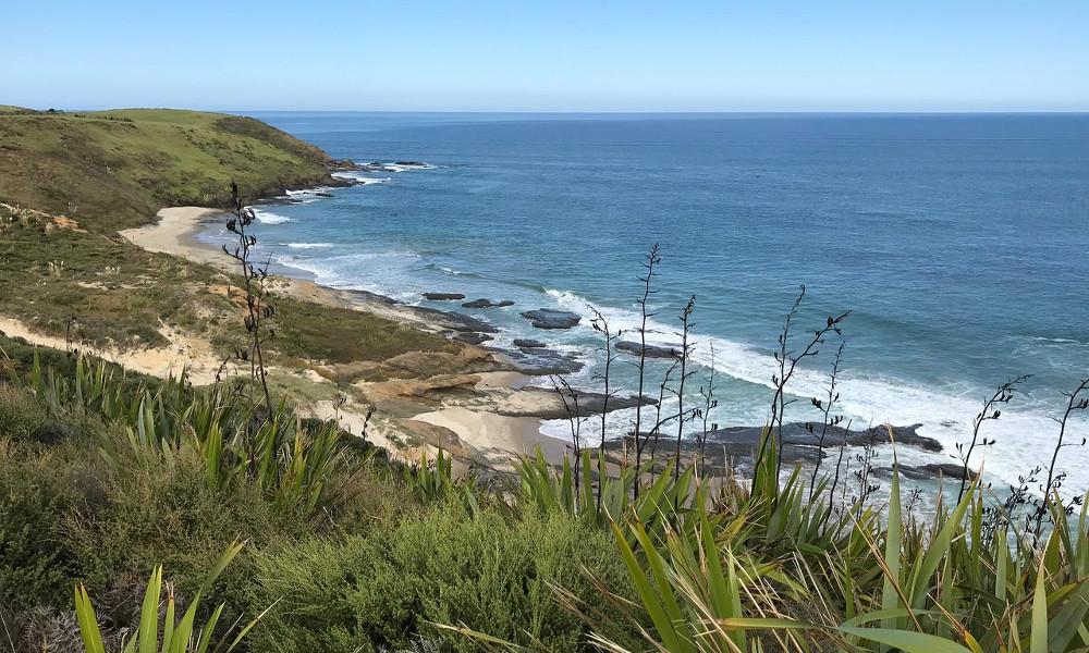 Arai Te Uru Coastal walkway, New Zealand @TripAdvisor