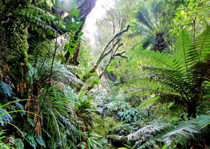Awakiki Bush Scenic Reserve, New Zealand @Catlins itineraries