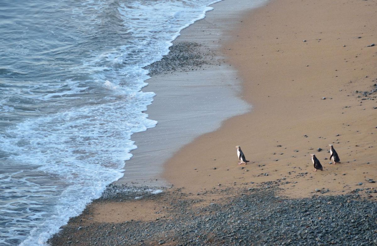 Bushy Beach, New Zealand @Department of Conservation