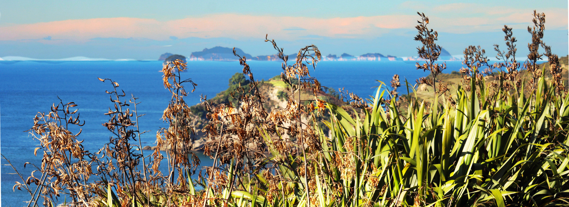 Coastal view, flax, islands and blue waters, Whitiangi