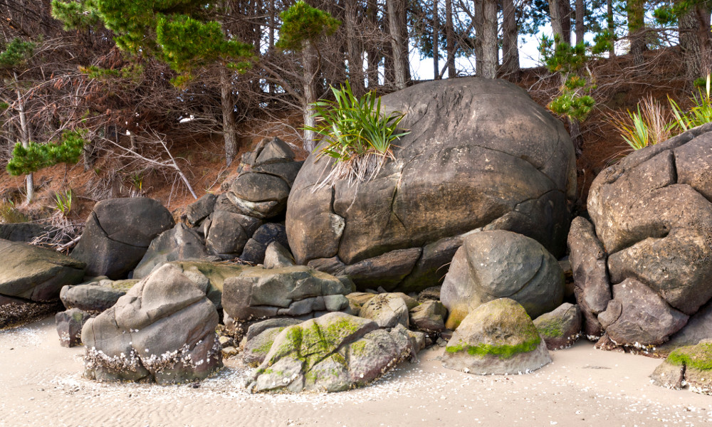 Concretions on Koutu Beach at Hokianga Harbour, Northland, in the North Island of New Zealand