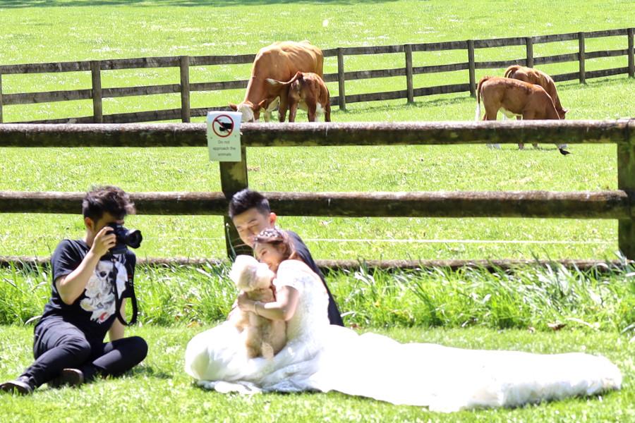 Cornwall Park bridal poses + bridedog, New Zealand