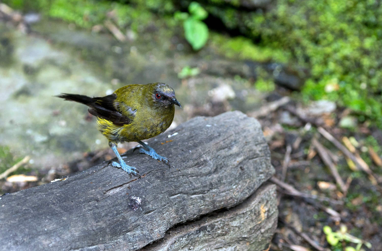 D'Urville Island, predator free, New Zealand