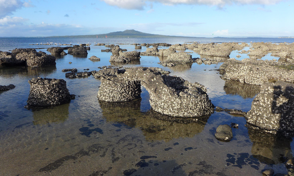 Fossilised Forest @GeoTrips – exploring NZ