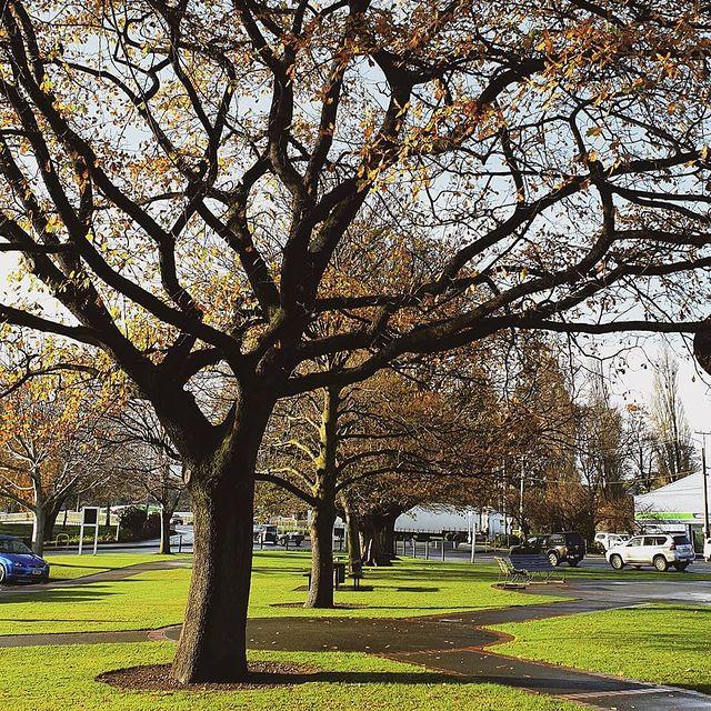 Gore, Autumn, New Zealand @gillianrose18