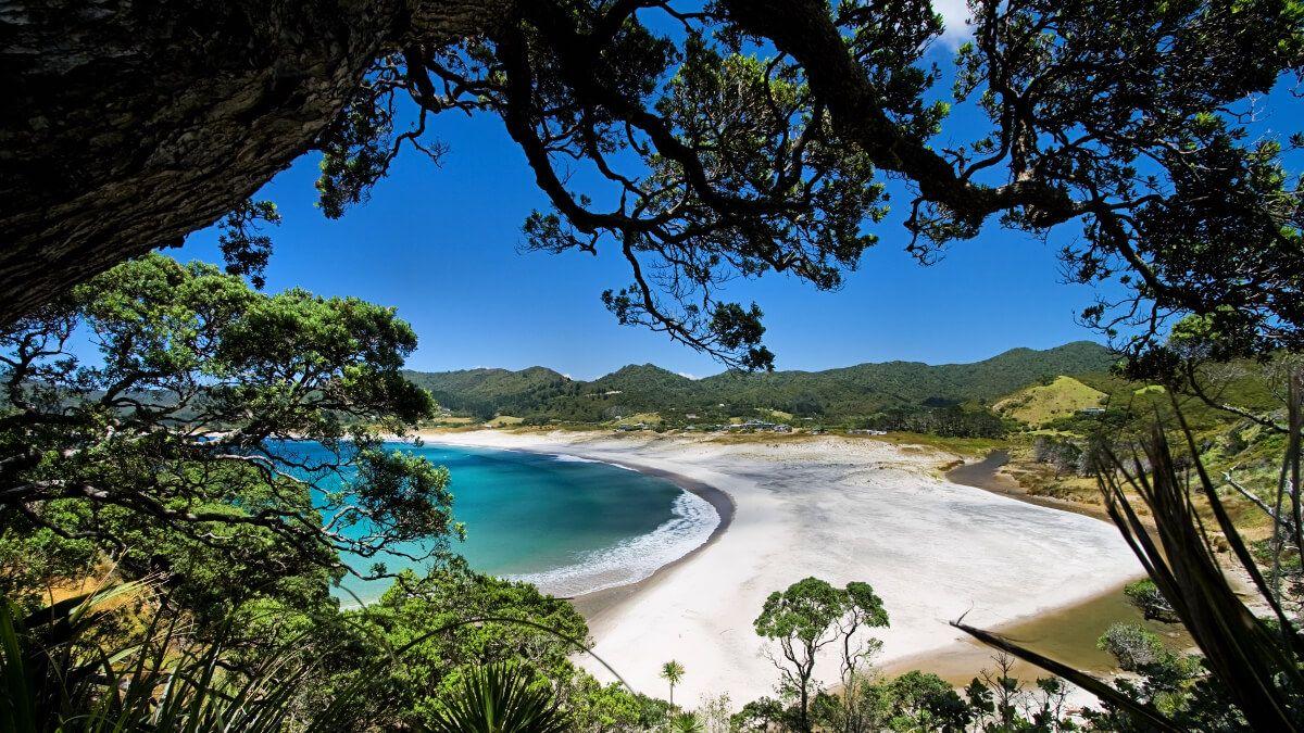 Great Barrier Island, New Zealand @Mason Bee