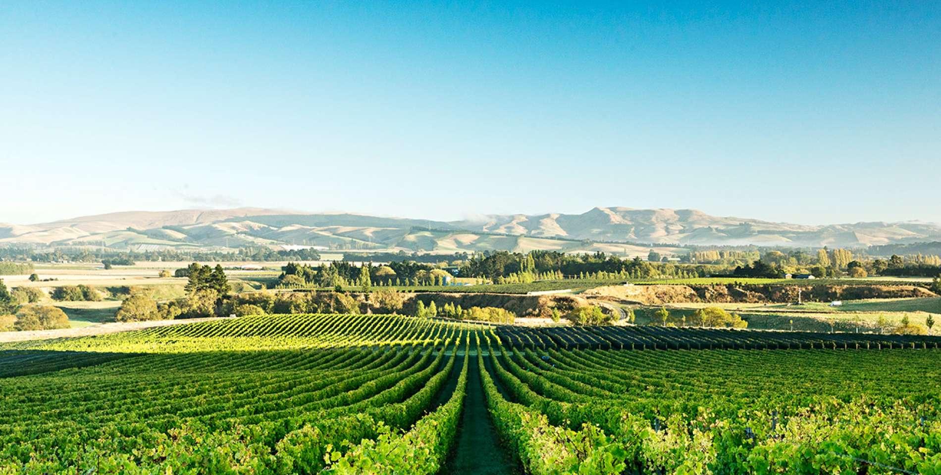 Greystone Wines, New Zealand @visithurunui