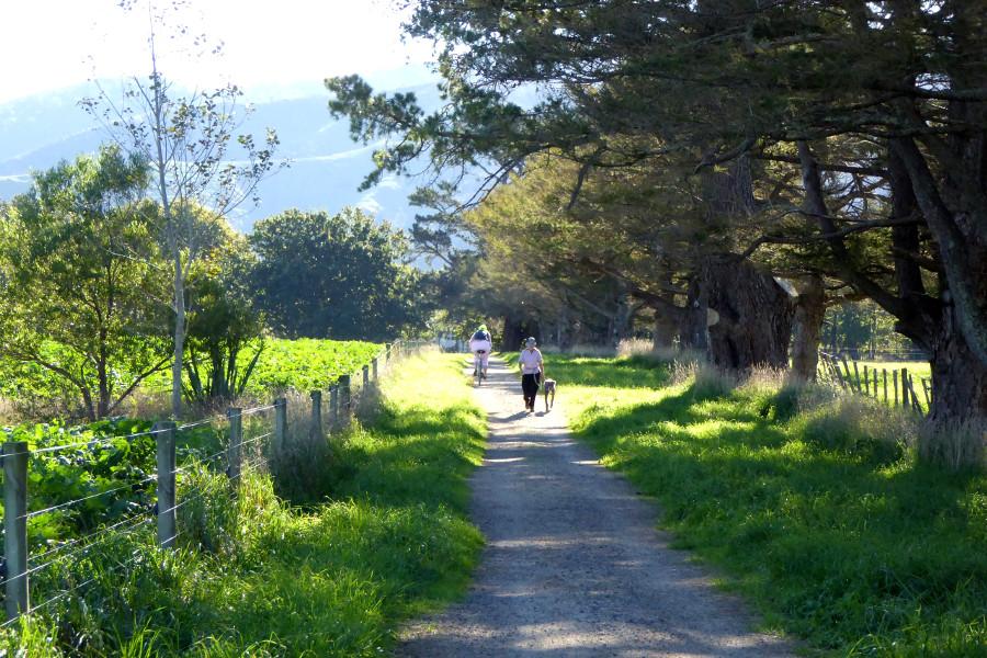 Greytown Trail, New Zealand @Walking New Zealand