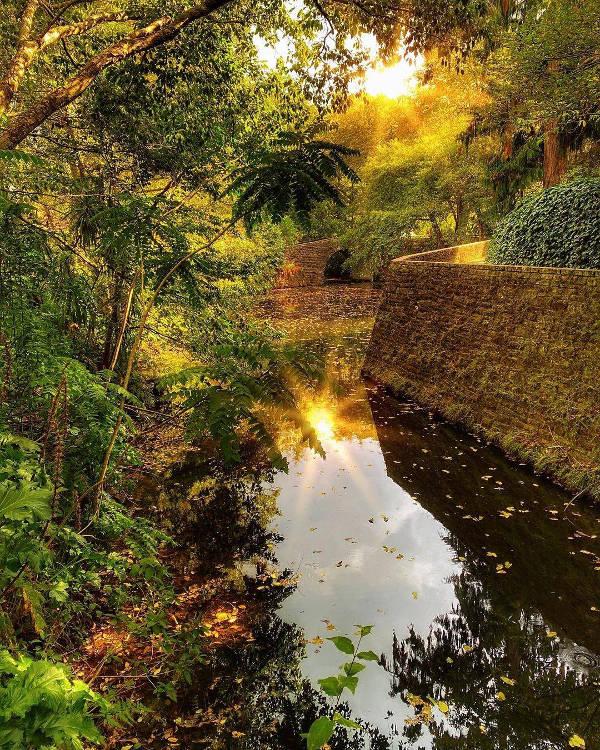Hamilton gardens @Matthew Xavier Lehnsherr