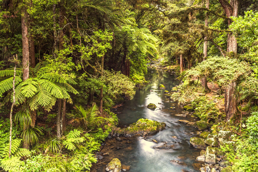 Hatea River, Whangarei Falls, New Zealand
