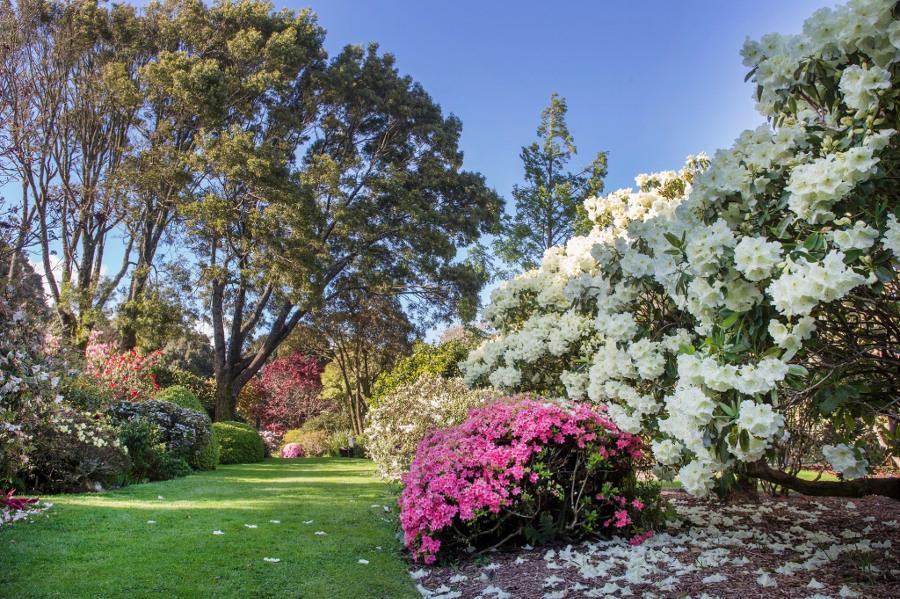 @Hollard Gardens