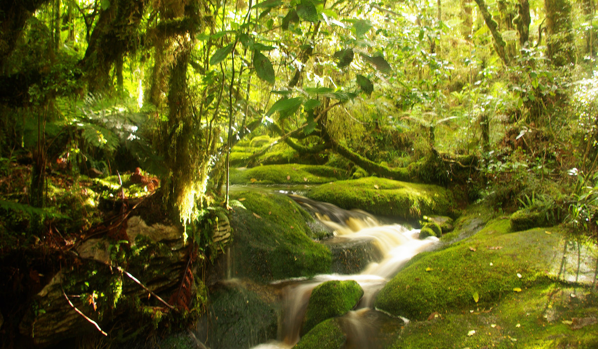 Kahurangi National Park, New Zealand @Thousand Wonders