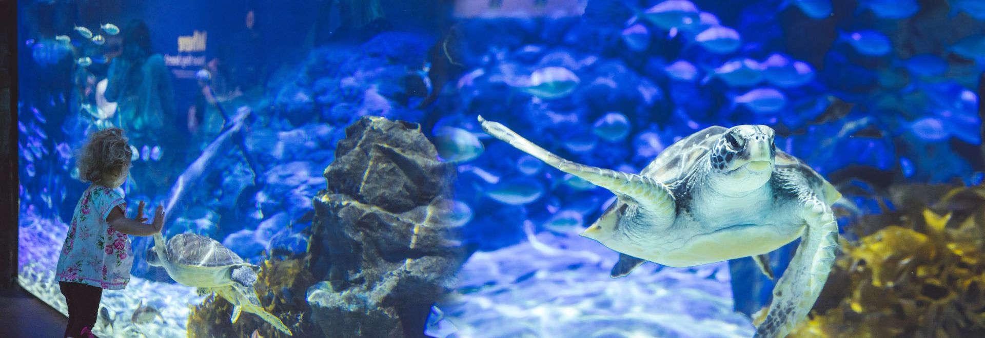 Kelly Tarlton's Sea Life Aquarium,Auckland,New Zealand @Freedom Tourism