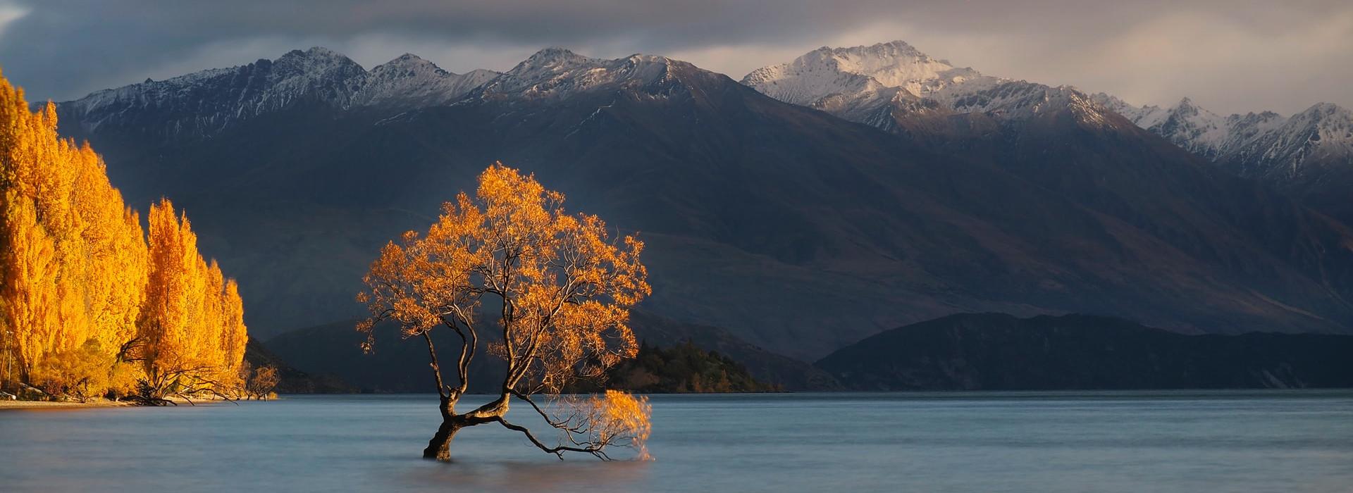 Lone Tree of Lake Wanaka @kunosch