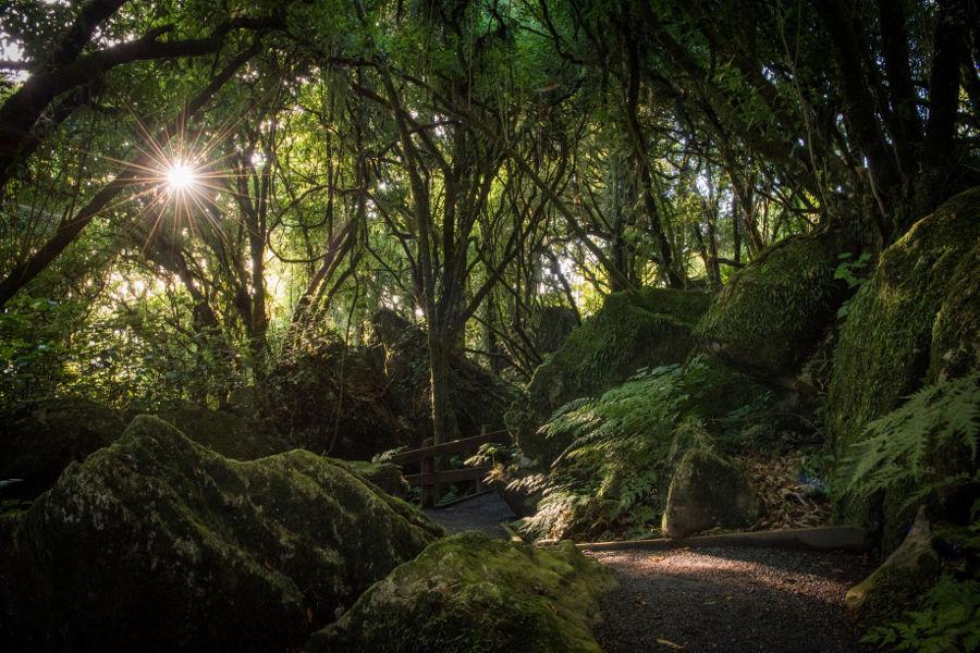 Mangaotaki walk, New Zealand @WaikatoNZ