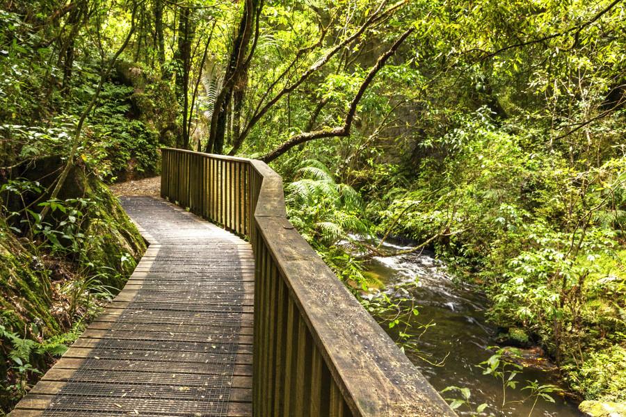 Pathway through New Zealand native bush, Mangapohue Natural Bridge