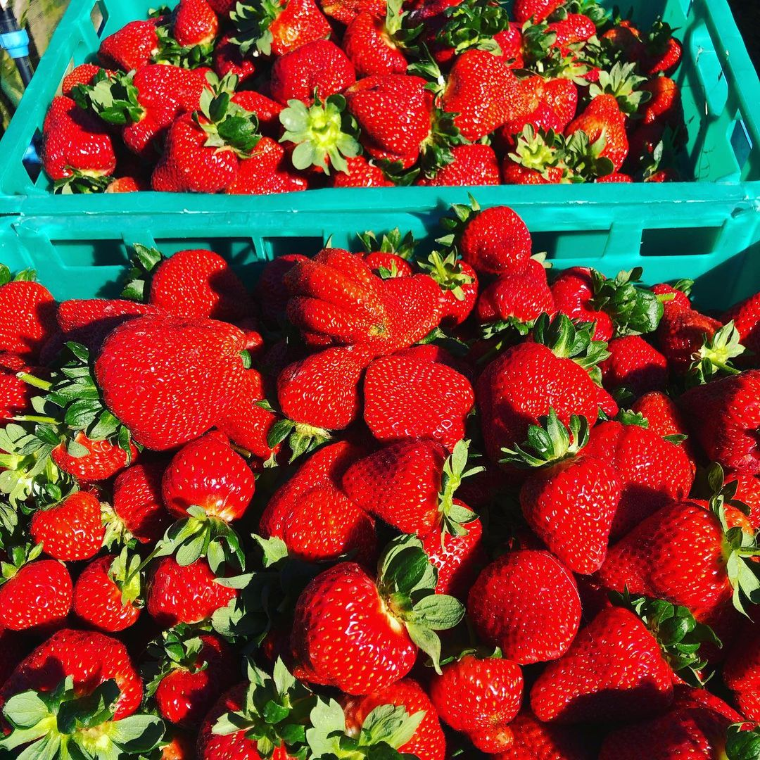 Moutere strawberry, New Zealand @mouterestrawberries
