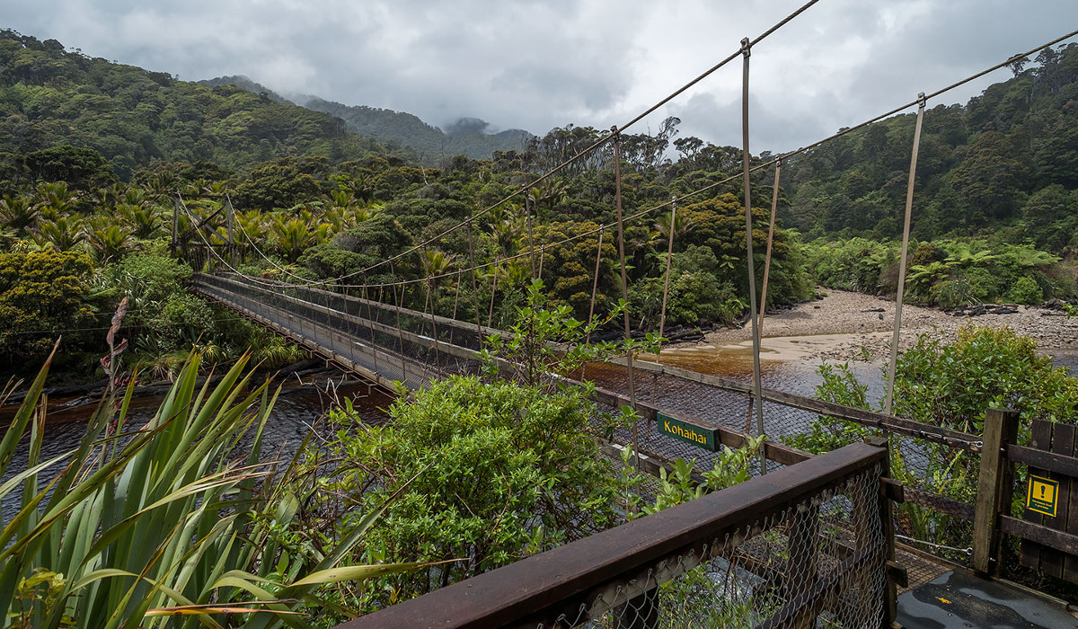 Nikau Walk, Kahurangi National Park, New Zealand @NZNationalParks