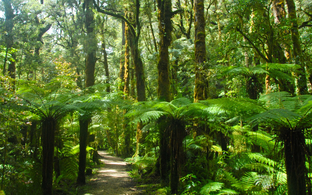 Oparara Valley Track, New Zealand @Away Together