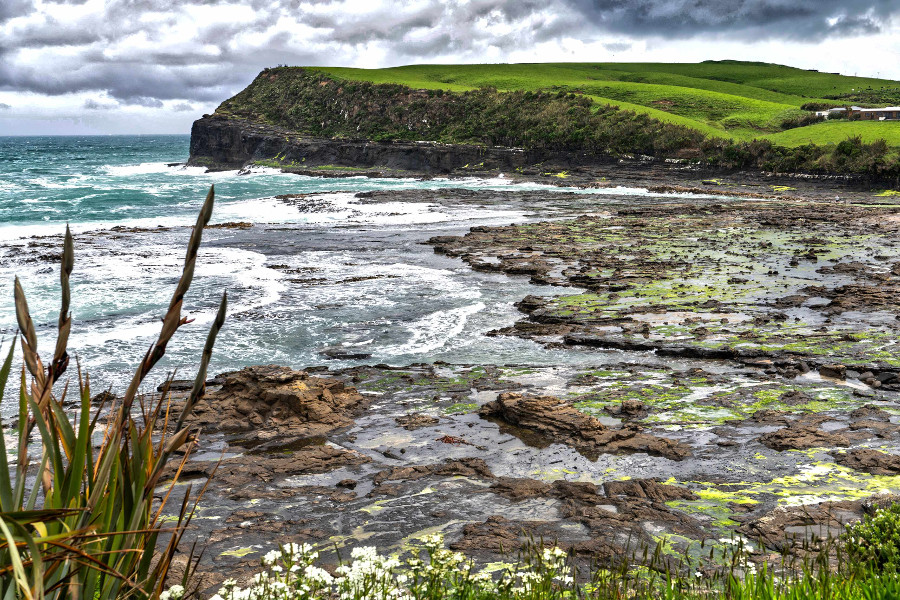 View of the Petrified Forest Beach at Curio Bay in the Catlins, New Zealand