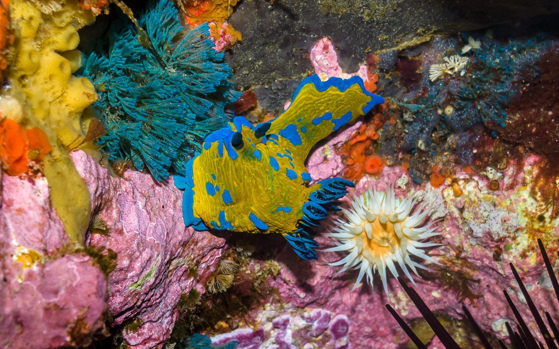 Poor Knights Islands Marine Reserve, New Zealand @Wanderlusters