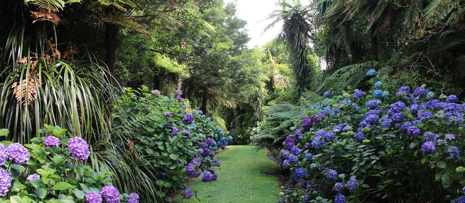Pukeiti Rainforest & Gardens, Taranaki, New Zealand @New Zealand