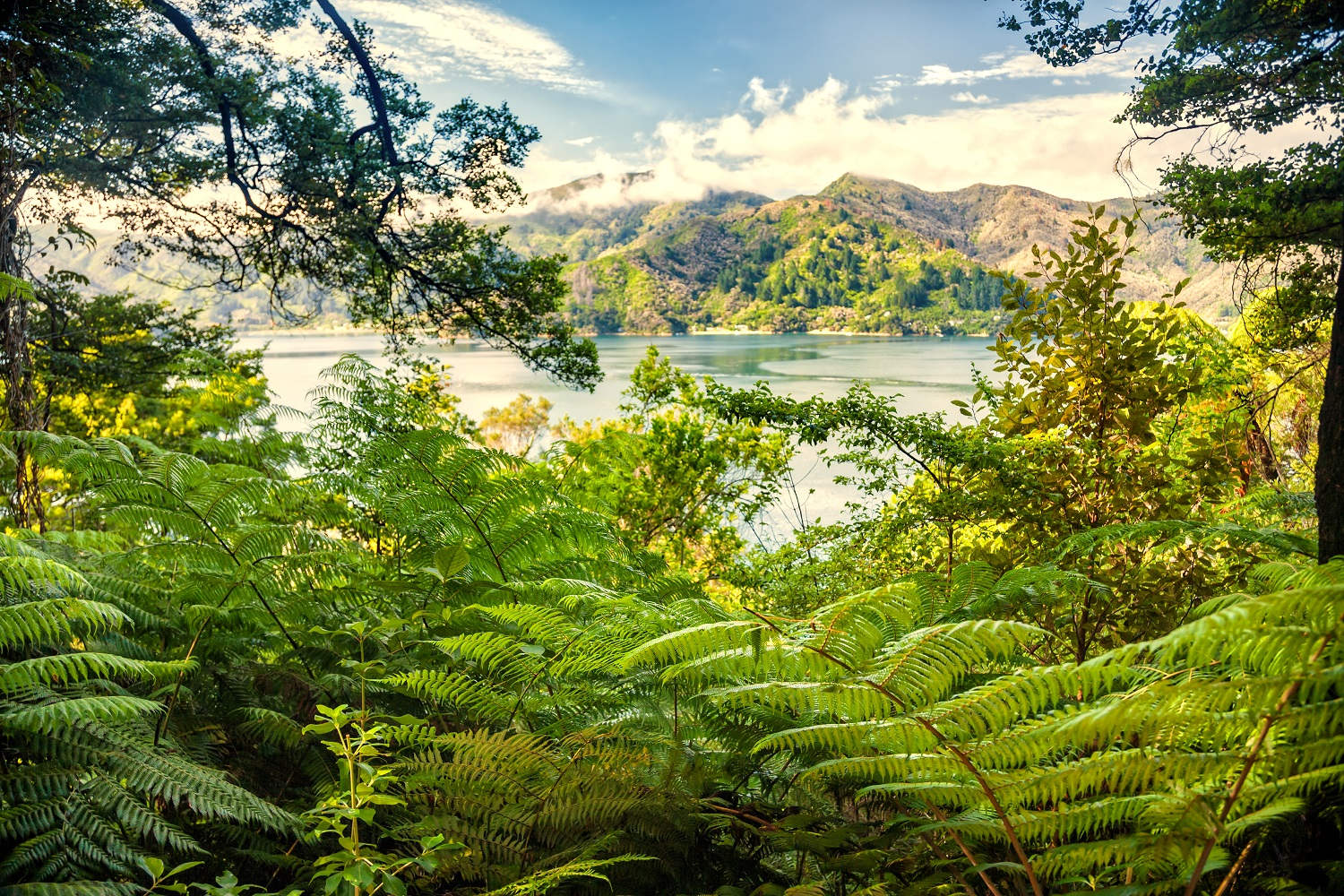 Queen Charlotte Track view, New Zealand