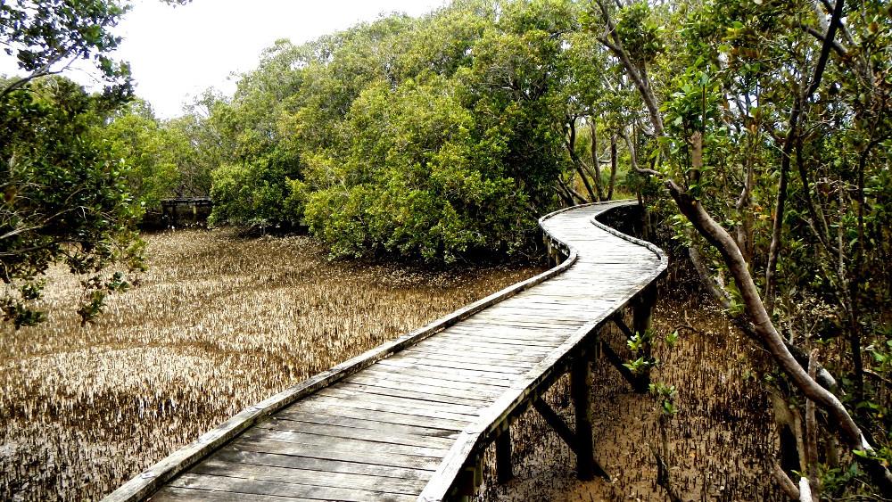 Rawene's mangrove boardwalk, New Zealand @Licorice Allsorts