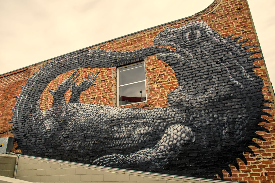 Street art painted by ROA from Belgium which is located in Dunedin, New Zealand