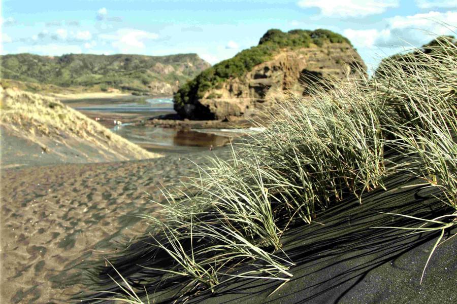 Te Henga iron sand dunes, West Auckland, New Zealand