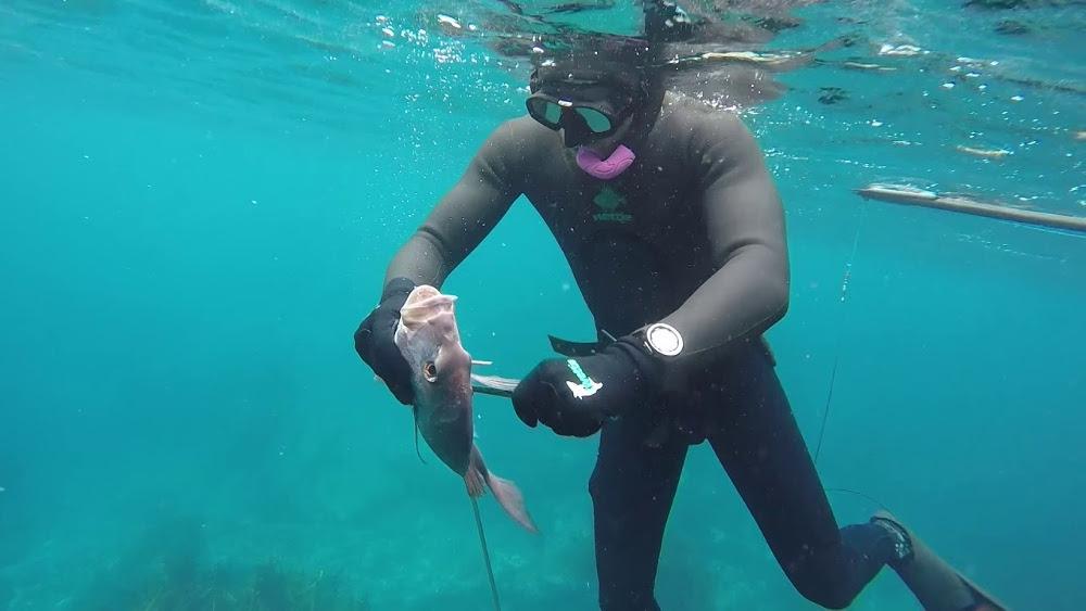 Spearfishing the Hen & Chicken Islands, New Zealand @Wettie TV