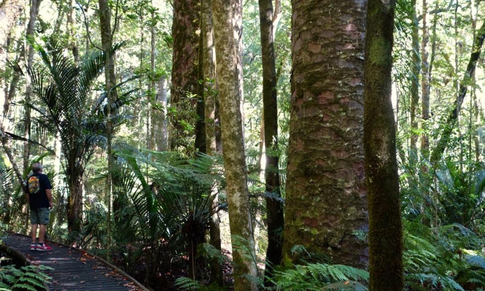 Trounson Kauri Park, New Zealand @Vagabon and Dave