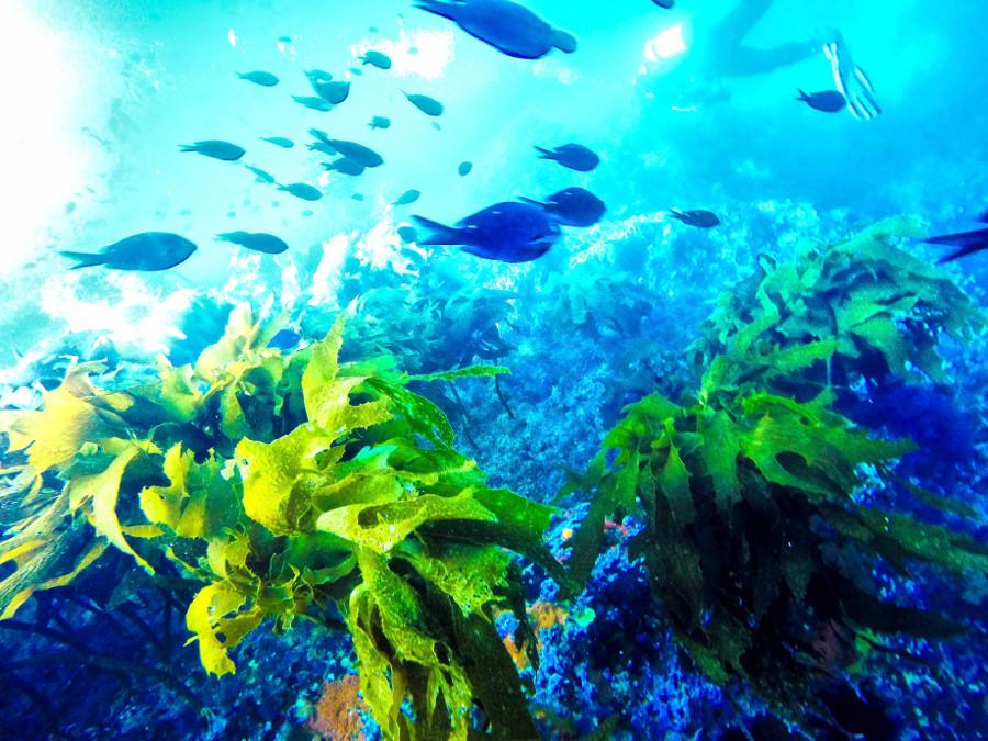 Tutukaka Dive experiences, New Zealand