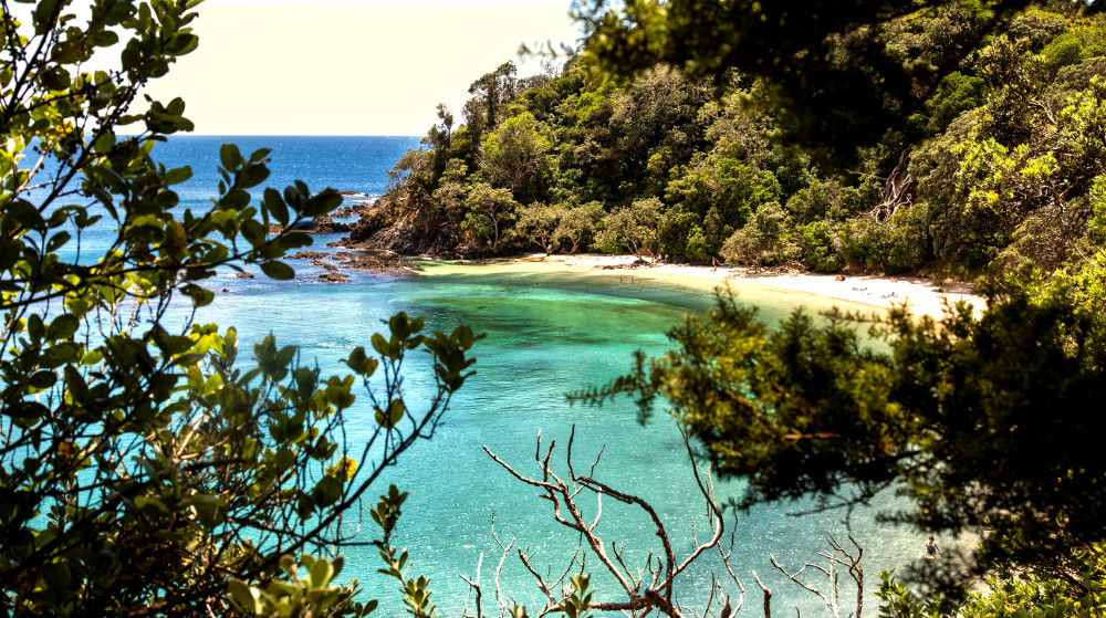 View through the trees walking down to Whale Bay, Northland, New Zealand