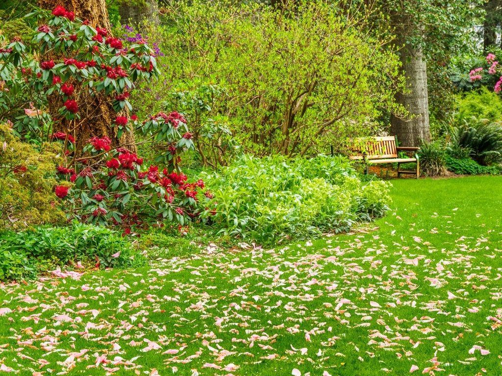 Waipahihi Botanical Reserve Taupo Azaleas and Rhododendrons @cheekykiwitravel