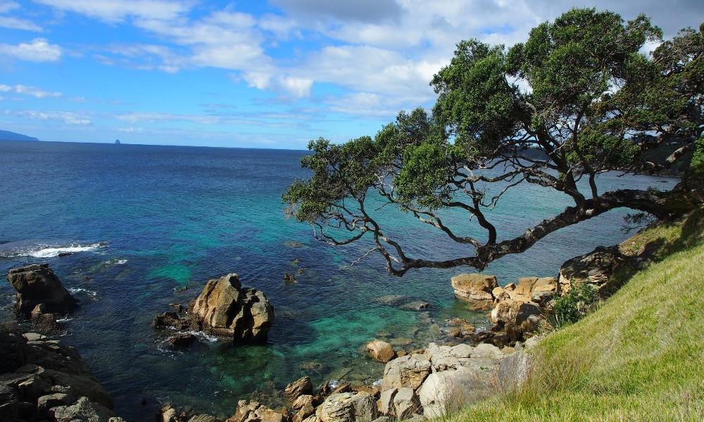 Waipu Cove to Langs Beach, New Zealand @Piwakawaka Tours Reservations