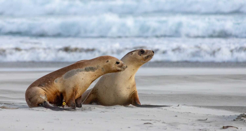Allans Beach, Otago, New Zealand @AllTrails