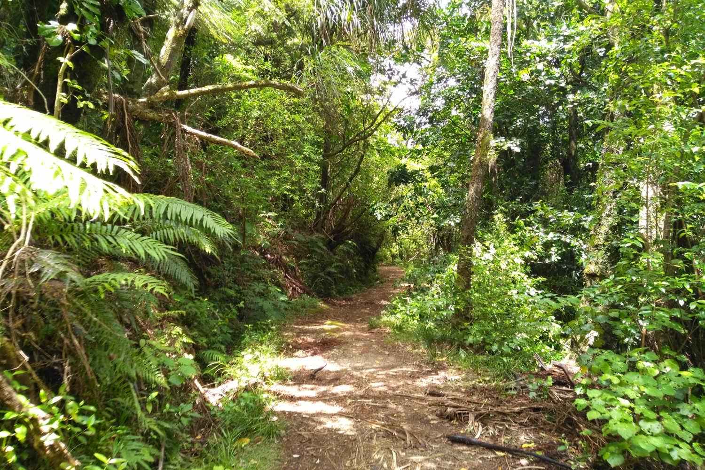 Aongatete Forest @Explore Tauranga