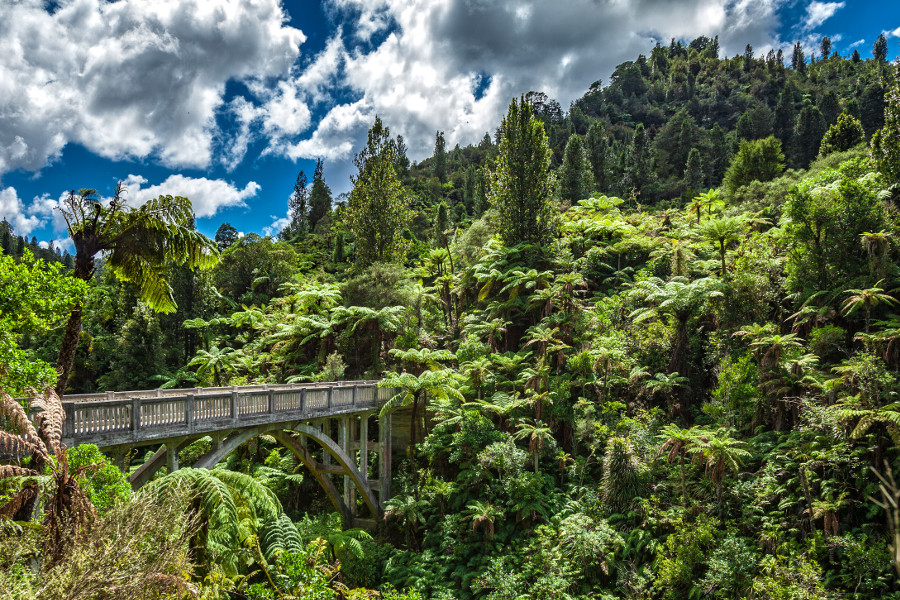 In the middle of the jungle of Wanganui on the northern Island of New Zealand