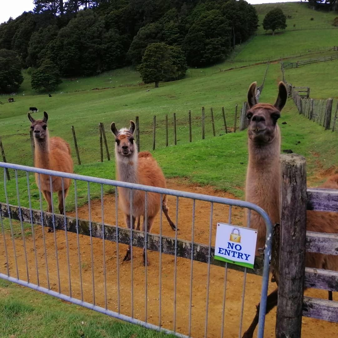 Bullswool Farm Park,New Zealand @loftusjane