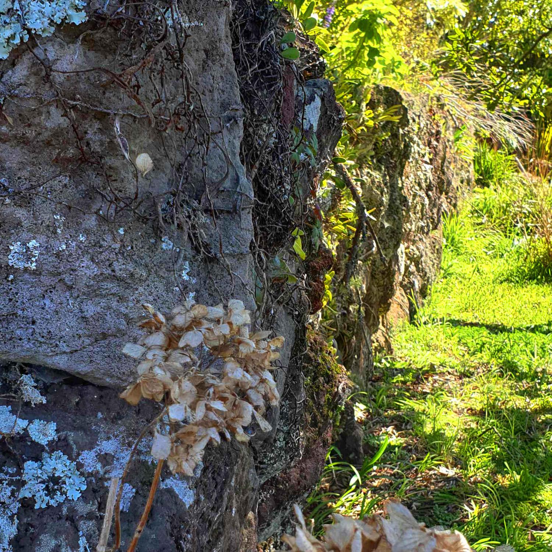 Dry stone walls 19th century, New Zealand