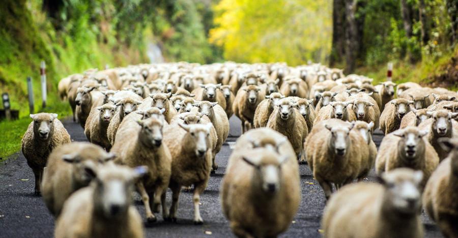 Forgotten highway travellers, New Zealand