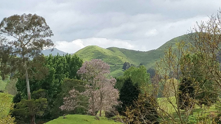 Hill farming with lilac and deciduous trees in spring bloom