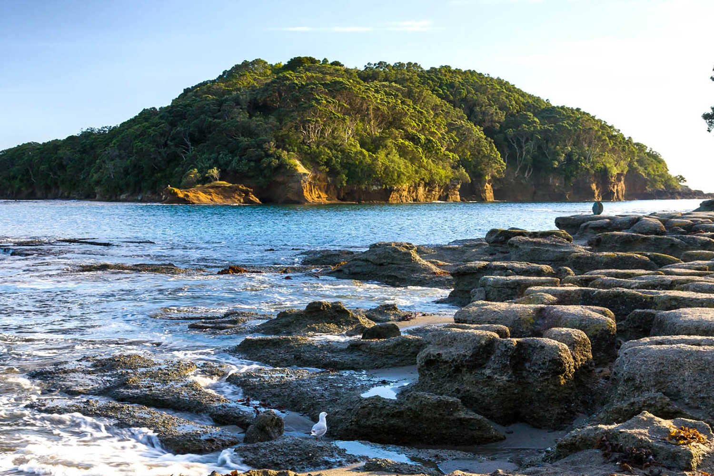 Goat Island Marine Reserve near Leigh North Island New Zeland