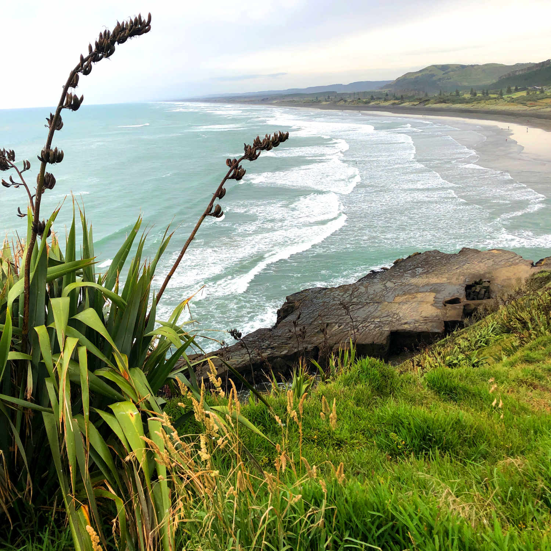 Muriwai Gannet,New Zealand